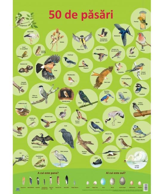 Planșă - 50 de păsări