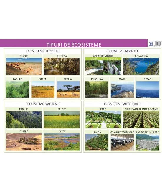Planșă - Tipuri de ecosisteme