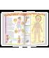Prima mea carte despre corpul uman - Cea mai frumoasă enciclopedie